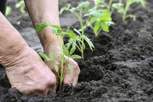 mantillo para plantas