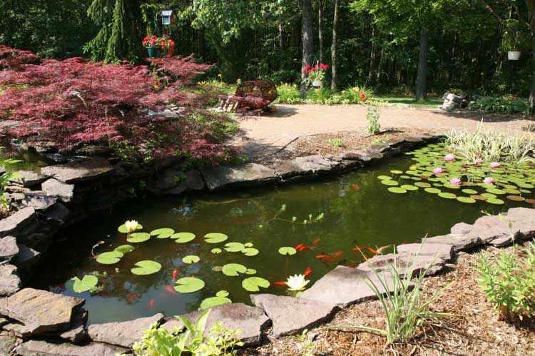 Como hacer jardines acuaticos