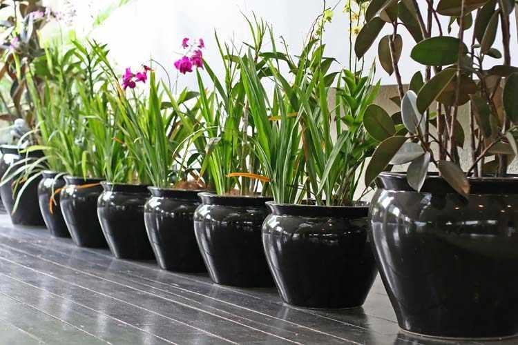 Plantas faciles de cultivar