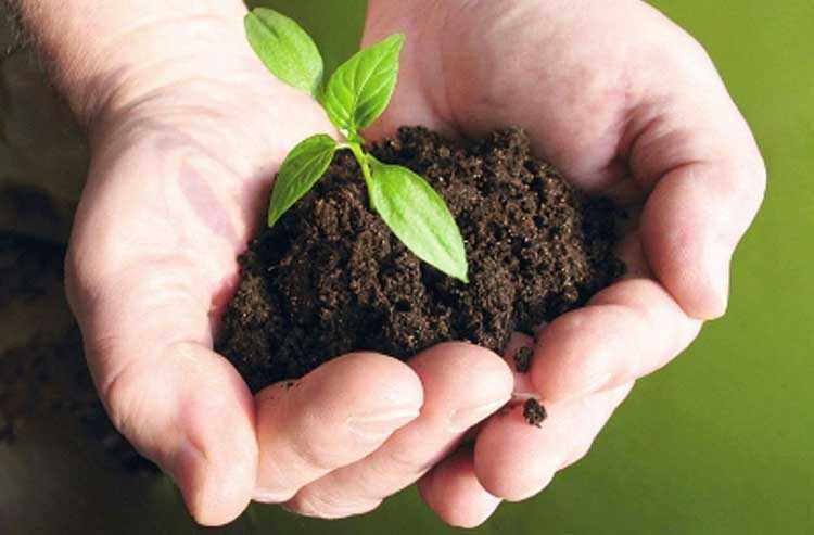 Los beneficios de la jardineria