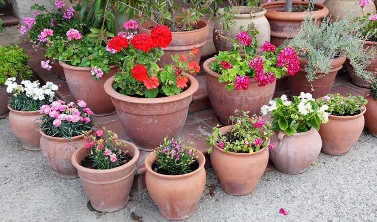 7 consejos de jardineria en macetas para principiantes for Como decorar un jardin con macetas