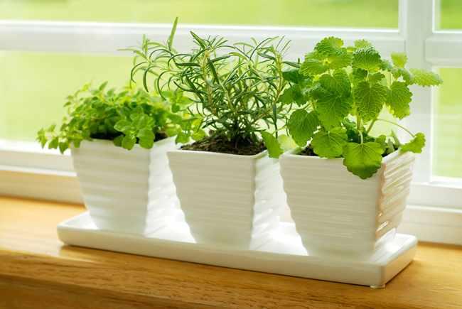 Como fertilizar plantas de interior