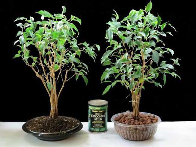 de arcilla para plantas