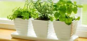 Plantas de interior con poca luz archives - Las mejores plantas de interior ...