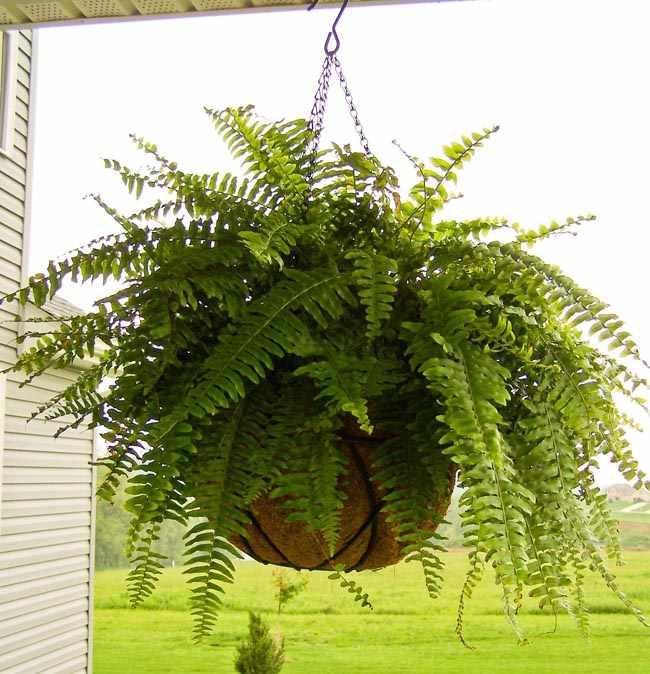 Como hacer cestas colgantes para plantas en macetas for Plantas colgantes para interior