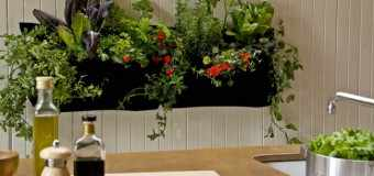 Plantas interior para ba o sin luz archives for Plantas interior sin luz