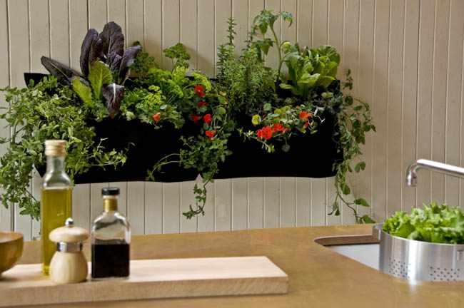 plantas de interior para cocinas