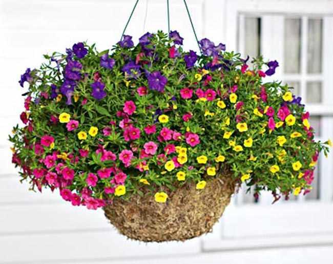 Como hacer cestas colgantes para plantas en macetas - Plantas para macetas exterior resistentes ...