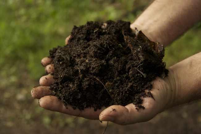 Como hacer abonos y fertilizantes organicos - Abono organico para plantas ...