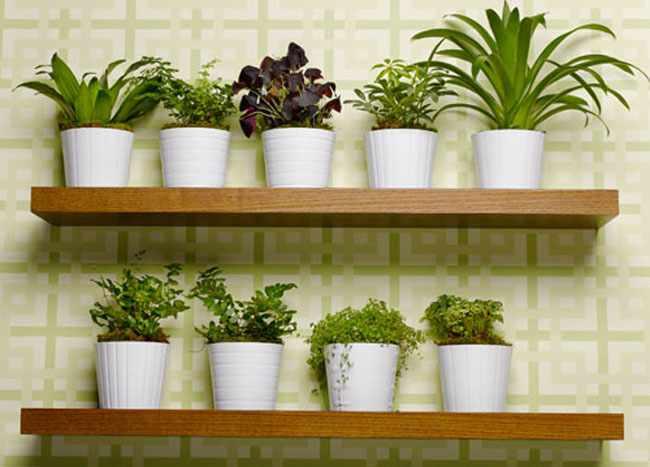 Plagas más comunes en las plantas de interior