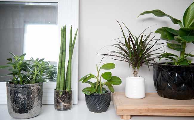 Plantas purificadoras de aire interiores - Plantas de interior purificadoras del aire del hogar ...