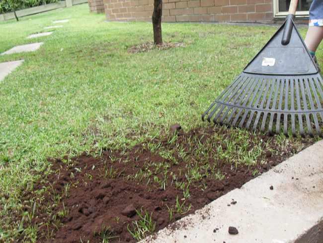 Cuando y como replantar cesped natural, siembra, mantenimiento y calvas