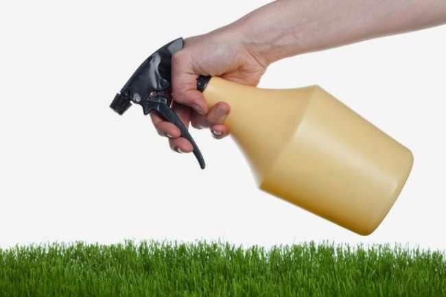 Plagas en las plantas - Como hacer un insecticida casero