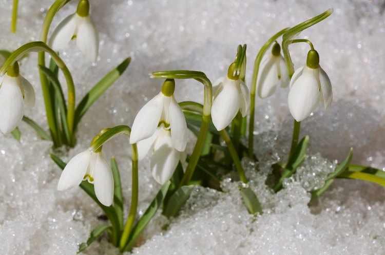 Cuidados del jardin en invierno - Como cuidar las plantas de exterior ...