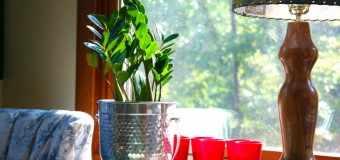 Plantas de interior - Plantas de interior que necesitan poca luz ...