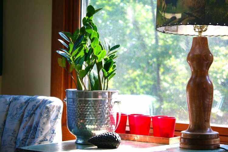 Plantas de interior que necesitan poca luz variedades y for Plantas de interior con poca luz