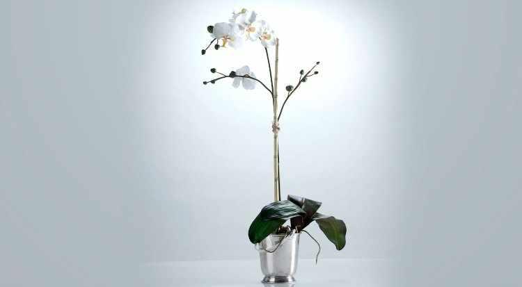 Plantas de interior que necesitan poca luz variedades y - Plantas que no necesitan luz ...