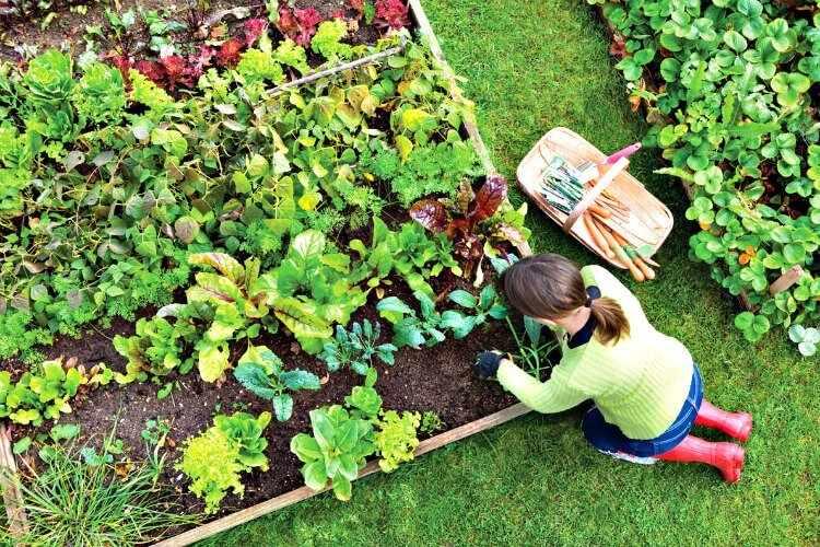 Cultivos de huerta tu huerto urbano en casa for Cultivo de verduras en casa
