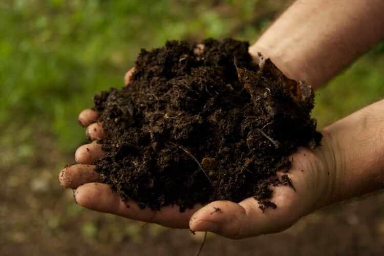Como hacer abonos y fertilizantes organicos archives for Abono para las plantas de jardin
