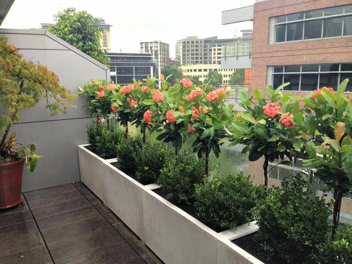 Plantas para terraza con mucho sol dise os - Plantas para terrazas con mucho sol ...