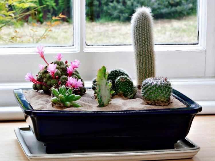 Como cuidar un cactus de interior en casa o en la oficina - Cactus de interior ...