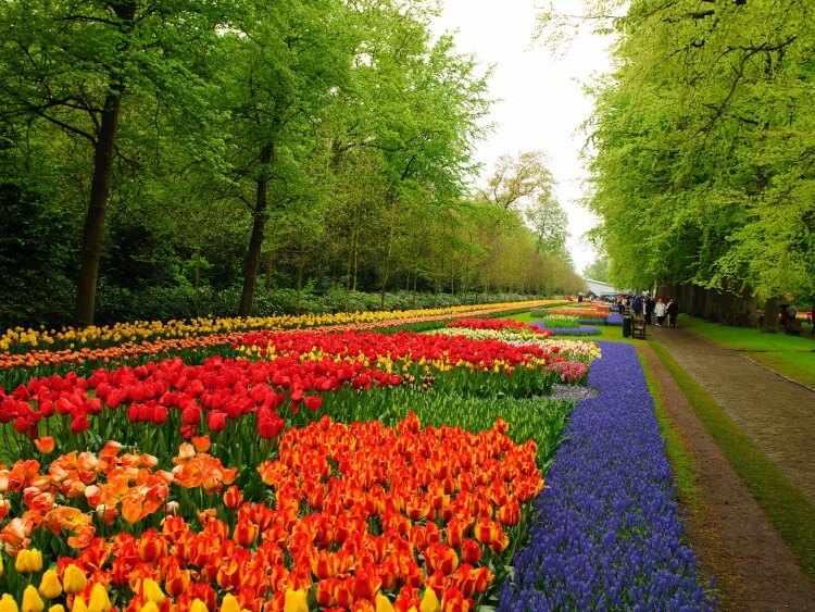Flores para jardines exteriores for Jardines exteriores para oficinas