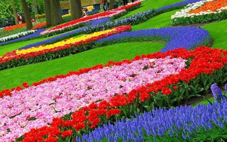 Flores para jardines exteriores for Flores de jardin exterior