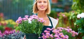 11 Consejos para el cuidado de las plantas
