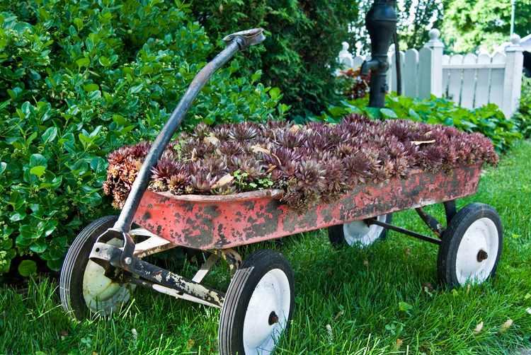 Decoracion de jardines rusticos dise os fotos e ideas for Jardines rusticos fotos