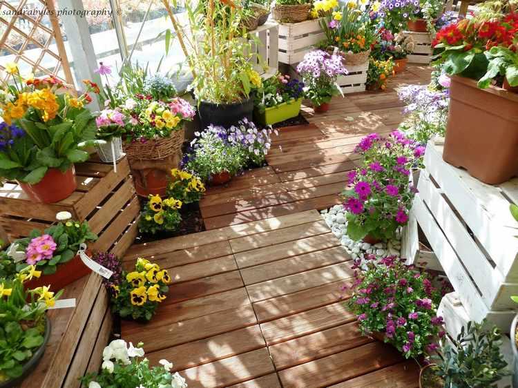 plantas para jardin exterior pequeño