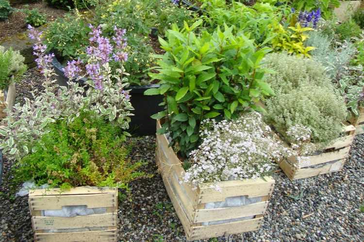 Plantas para jardines peque os variedades y decoracion - Plantas para jardines pequenos ...