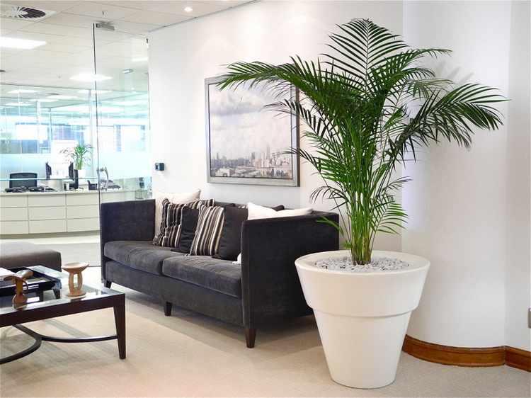 Plantas de interior tipos variedades cuidados y riego - Plantas grandes de interior ...