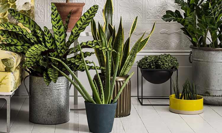 Plantas de interior tipos variedades cuidados y riego Plantas tropicales interior