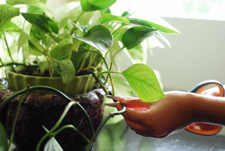 Plantas de interior tipos variedades cuidados y riego - Plantas ornamentales de interior ...