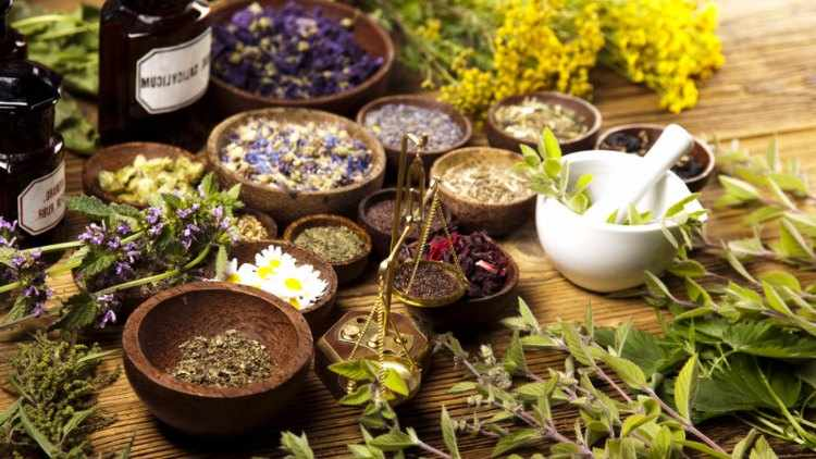 ejemplos de plantas medicinales