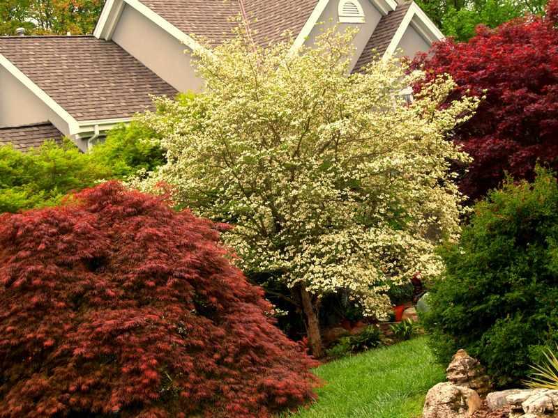 Arboles para jardines pequeos de hoja perenne simple free for Arboles de flores para jardin