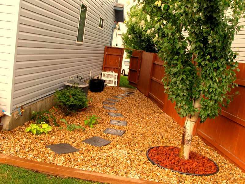Como elegir un arbol para el jardin sobra crecimiento for Arbustos para patios