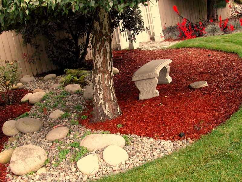 como elegir un arbol para el jardin sobra crecimiento On arboles de jardin para sombra