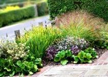 arbustos para jardin