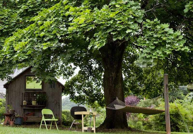 tipos de arboles para jardin sombra perenne