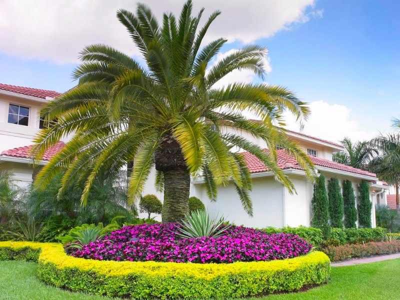plantas palmeras de exterior