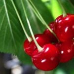 Propiedades y beneficios del cerezo