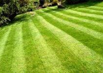 Cuando y como replantar cesped natural siembra mantenimiento y calvas - Cuando plantar cesped ...