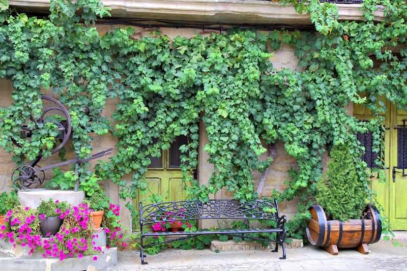 plantas trepadoras jardin