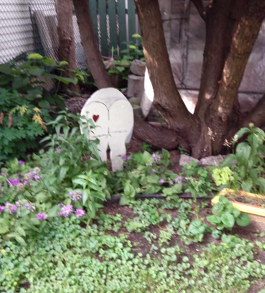 Consejos prácticos para cuidar el jardin