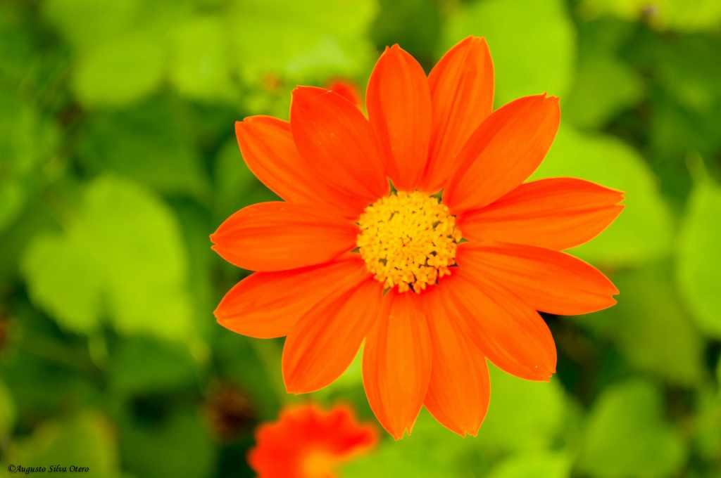 Consejos para proteger plantas del sol