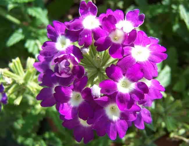 Consejos para tratar las enfermedades de las plantas