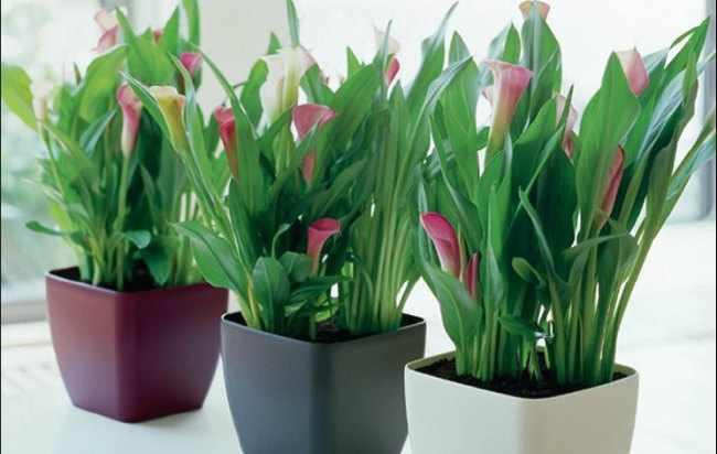 Mantenimiento plantas de interior