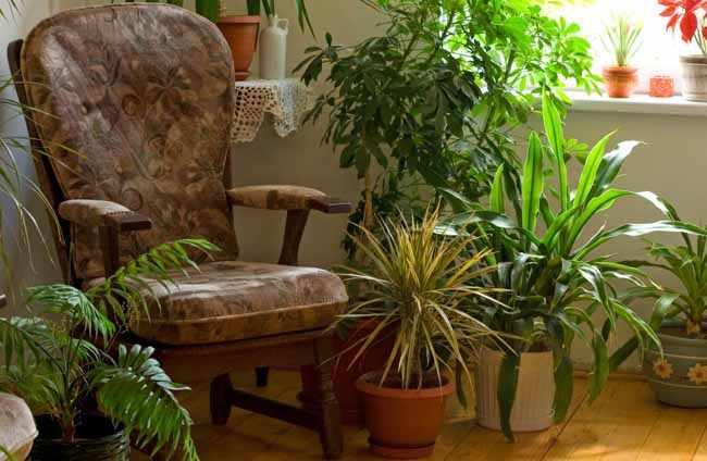 Que plantas de interior puedo poner
