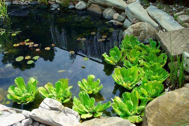 Como hacer jardines acuaticos caseros